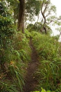 Primitive plant communities span heathland plateaus to temperate rainforest. Photo Credit: C.Munro for SydneyOutBack.com.au
