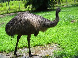 Emu 2010
