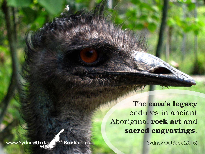 Emu_3 2016