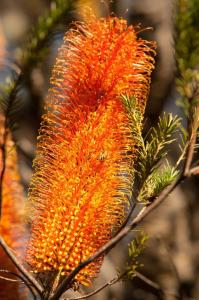 KCNP Flora2 MUNRO